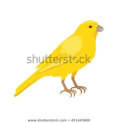 Domestic songbird concept in flat style design. Illustration for pet stores advertising, childrens books illustrating. Beautiful yellow canary bird seating on brunch isolated on white. Canary Birds, Flat Style, Pet Store, Fashion Flats, Childrens Books, Brunch, Advertising, Concept, Pets