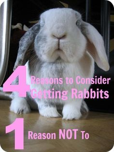 4 Reasons to Raise Rabbits | The 104 Homestead - Rabbits are wonderful creatures.  They have so much to offer and in the grand scope of things, they require very little care.  The reasons for keeping rabbits fall into four major categories.