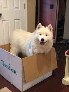 Koda in the box