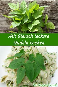 """Delicious housewife-style Giersch noodles-Leckere Giersch-Nudeln nach Hausfrauenart Just eat the greed! With this recipe, the """"weed"""" enriches into a healthy and delicious dish! A Food, Food And Drink, Stuffed Mushrooms, Stuffed Peppers, Evening Meals, Medicinal Herbs, Steak Recipes, Food Items, Tasty Dishes"""