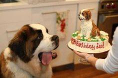 Animals celebrating their birthdays (29 photos)