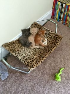 Where can I get this leopard print kitty hammock?!