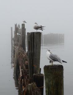 Birds Ocean Sea: Gulls in a row. Saint Monique, Mundo Animal, Am Meer, Sea Birds, Belle Photo, Beautiful Birds, Eagles, Mists, Coastal