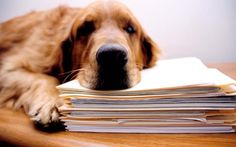 Dog behaviour problems? Here's the ten most common causes http://clclp.me/4OLl