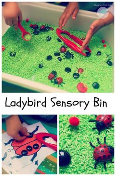 Ladybird Sensory Bin fun maths and counting activity for minibeast fans. Perfect for toddlers and preschoolers for some spring and ladybird themed sensory and learning fun. Eyfs Activities, Nursery Activities, Preschool Activities, Spring Activities, Outdoor Activities, Sensory Tubs, Sensory Boxes, Sensory Play, Preschool Toys