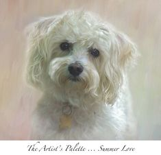FUR-BABY PORTFOLIO - Belle Fluer Textures & Botanicals Watercolor Canvas, Dog Portraits, Animal Paintings, Beautiful Dogs, Painting Techniques, Pet Birds, Painting & Drawing, Fur Babies, Art Projects