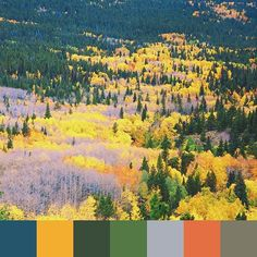 Loving this unexpected fall palette submission from @suump! Submit yours to #foundpalettes