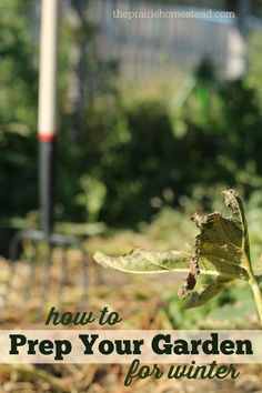 How to Prep your Garden for Winter (and give your soil a natural fertilizer boost in the process!)