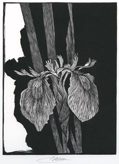 Barry Moser. Iris Pseudacorus (wood engraving). Published by Pennyroyal Press in 1978.