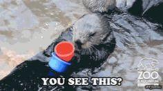 otter unstackable cups gif - Sök på Google