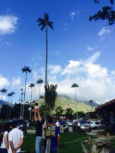 Valle del Cócora Trout, Beautiful Landscapes, Four Square, Natural, Climbing, Dolores Park, Hiking, Travel, Palmas