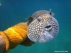 Isla Tortuga snorkelling (day trip from Montezuma) Zuma tours?