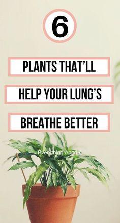 Container Gardening, Gardening Tips, Indoor Gardening, Household Plants, Household Tips, Shade Plants, Pot Plants, Gutter Garden, Laundry Solutions