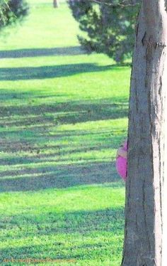 Pregnant tree...