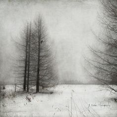 What You Seek You Will Find 相片擁有者 jamie heiden Texture Photography, Abstract Photography, Artistic Photography, Fine Art Photography, Landscape Photography, Photography Ideas, Winter Painting, Winter Art, Abstract Landscape