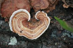 Hearts of Nature <3