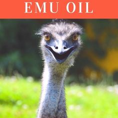 The Powerful Benefits Of Emu Oil