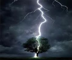 Trees and Thunder | View topic - Mapleclan {Newly Opened and Accepting}…