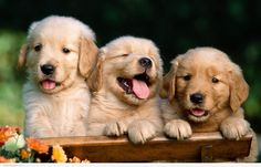 Cute Puppies To Get You Through Finals Week | Odyssey