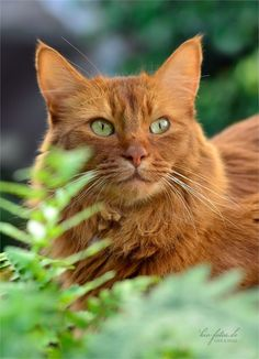 1000 Ideas About Cats Outside On Pinterest Outside Cat