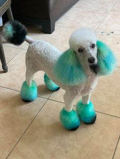 Cute work done with PAWZ Permanent Pet Hair Dyes. Suitable for Dogs and Horses. For Shot & Long Hair + 20 washes lasting time. Thank you Larissa Malter for sharing with us! Dog Grooming Styles, Poodle Grooming, Pet Grooming, Dog Hair Dye, Dog Dye, Cute Puppies, Cute Dogs, Poodle Haircut, Poodle Cuts