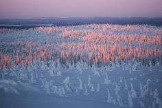 Tiina Törmänen Finland, Airplane View, National Parks, Mountains, Pastels, Delicate, Travel, Purple, Viajes