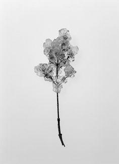 Transparency Is the New Mystery ©Mayumi Hosokura