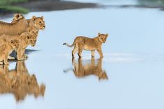 Lake Ndutu- North Tanzania by Marc MOL