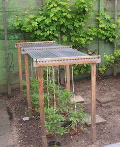 Dandruff for peppers or tomatoes Sjeftuintips # - Diy Garden Projects Bean Trellis, Garden Trellis, Herb Garden, Indoor Garden, Outdoor Gardens, Tomato Trellis, Veggie Gardens, Fruit Garden, Growing Plants