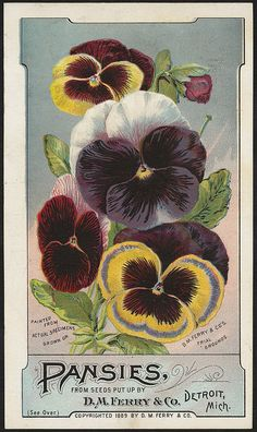 Pansies from seeds put up by D. M. Ferry & Co., Detroit, Mich. (front) | Flickr - Photo Sharing!