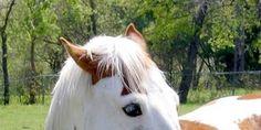 Horse Preschool Lesson Plan- snack ideas & more! Preschool Rooms, Preschool Lessons, Farm Theme, Daycare Ideas, Autumn Theme, Cowboys, Homeschool, Room Ideas, Classroom