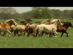 Black Beauty Ranch: America's Largest Animal Sanctuary - YouTube
