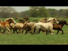 Black Beauty Ranch: America's Largest Animal Sanctuary - YouTube