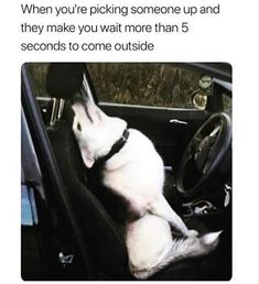 cool Dog Memes That Are Too Freaking Hilarious (46+ Pictures)