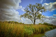Thumbs Twiddling on the Keyboard, Lonely tree on the Norfolk Broads