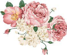 Victoria boruları / çiçekler