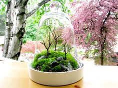 Moss terrarium with cloche- this is in the works! I just picked up some moss from a friend tonight!