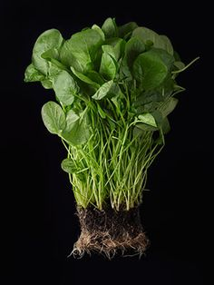 Watercress: Are You Eating This Powerhouse Green? | This powerhouse green might change your life. #SELFmagazine