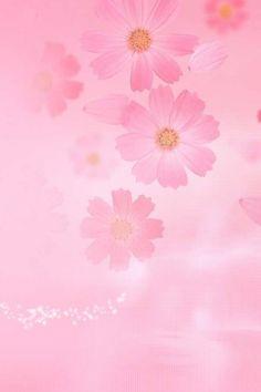 Vaaleanpunaiset kukat