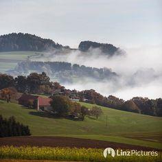 #herbst  #lichtenberg #linz #linzpictures #sunny #nebelgrenze #fall #nebel #igerslinz #mühlviertel #autumn #landscape #landlust #wanderlust #oö #upperaustria #potd #mood #fog #foggy #linzer #landwirtschaft