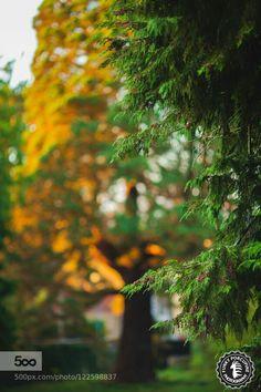 Manoj Sequoia on sunlight fire by Vincent Pelletier on