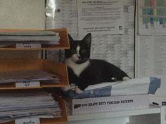'What?' Little Harley making the office her own. Happy Caturday. #happycaturday #catslife #cats #cat #catsofinstagram #catlover #Dudeandthegirls #thegirls #dude #mustbecatlove #catsagram