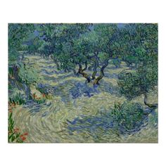 Olive Orchard by Vincent Van Gogh Perfect Poster