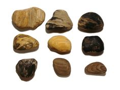 Petrified Wood, Illawarra Coal Measures, North Beach, Wollongong, NSW, Late Permian, (104.3g, 92.3g, 84.5g, 54.2g, 51.8g, 58.5g, 50.6g, 30.9g, 23.0g)