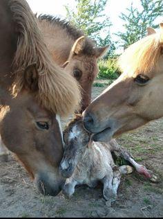 These Funny Animals beautiful-creatures Farm Animals, Animals And Pets, Funny Animals, Cute Animals, Newborn Animals, Wild Animals, All The Pretty Horses, Beautiful Horses, Animals Beautiful