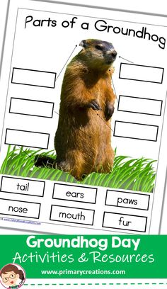 Label the features of a Groundhog with this activity! Preschool Groundhog, Groundhog Day Activities, Holiday Activities, Preschool Printables, Preschool Crafts, Preschool Activities, Class Room, Tot School, Presidents Day