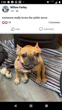 Puppy Sitting, Pellet Stove, French Bulldog, Puppies, Dogs, Animals, Cubs, Animales, Animaux