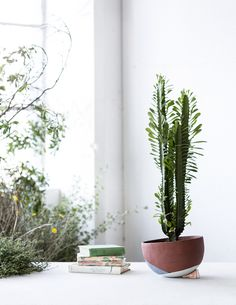 The Lazy Season handmade planter by The Fortynine Studio and The Planthunter. Photo – Daniel Shipp.
