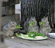 Gladys...you didn't tell me this was a salad luncheon!