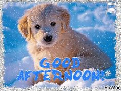 See the PicMix Good Afternoon belonging to leahbelle on PicMix. Good Afternoon, Labrador Retriever, Thankful, Animation, Creative, Dogs, Cute, Animals, Labrador Retrievers